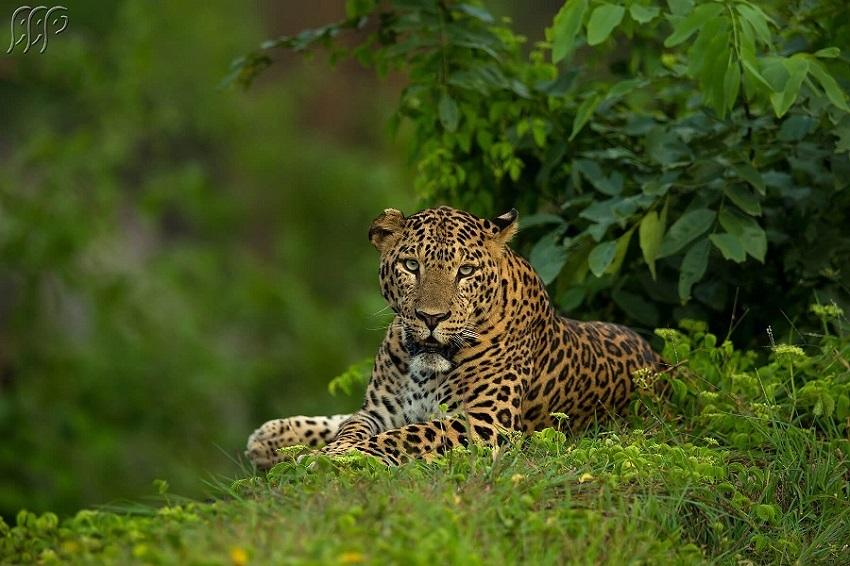 Sudhir Shivaram Photography Pvt Ltd
