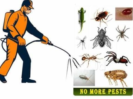 Pest control Services, Ahmedabad, Gujarat, India