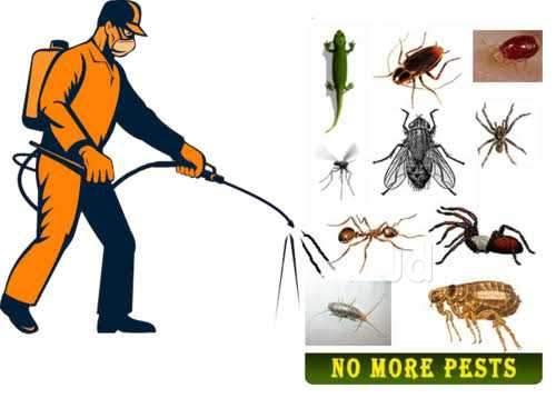 Pest control Services, Ahmedabad, Gujarat, India