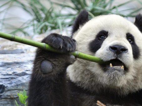 Marketing Panda – Digital Marketing Agency