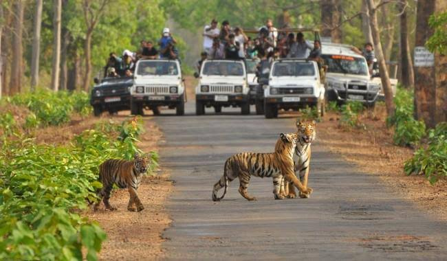 Jaipur Ranthambore One Day Trip